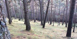 EVOLUCIÓ DELS BOSCOS D'ANDORRA La presència i la diversitat de boscos aporta molts beneficis ecològics, econòmics i socials al país.